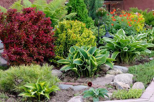 Хосты в дизайне сада