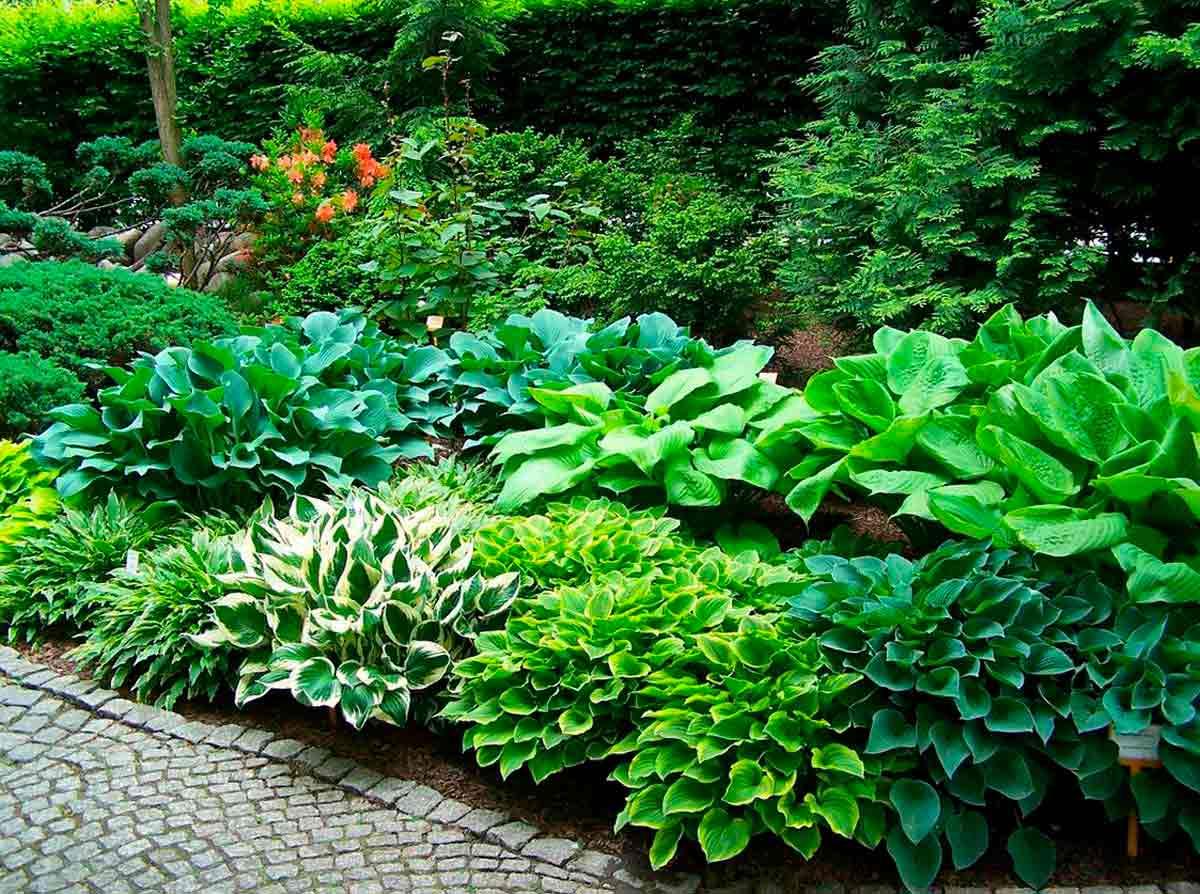 Современный сад не может состоять из